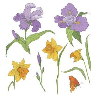 Ilustração de flores desenhadas à mão graficamente coloridas. íris florescendo e narcisos. ramo com brotos e folhas fechados.