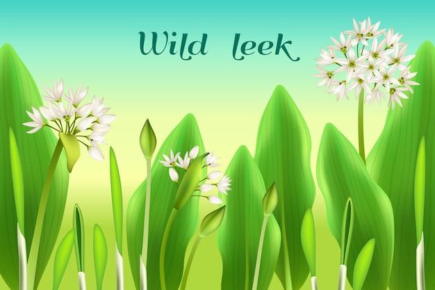 Ilustração de flores e folhas de alho-poró,