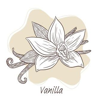 Ilustração de flores e paus de baunilha desenhada à mão para logotipo, receita, menu, emblema, tatuagem, impressão, spa, perfume, produtos de beleza