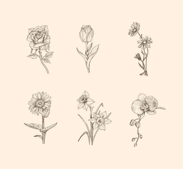 Ilustração de flores vintage com estilo desenhado à mão