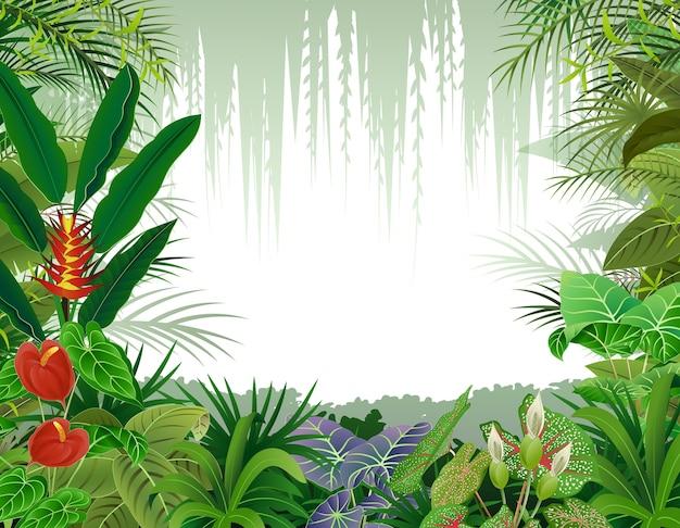 Ilustração, de, floresta tropical