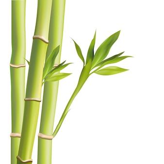 Ilustração de folhas de bambu. ilustração com objetos isolados