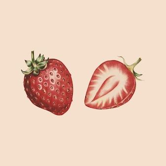 Ilustração, de, fruta, aquarela, estilo