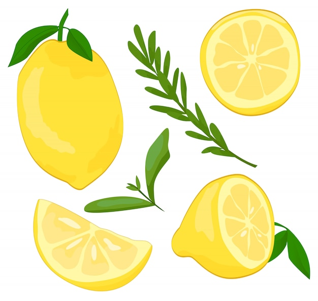 Ilustração de frutas cítricas e limão