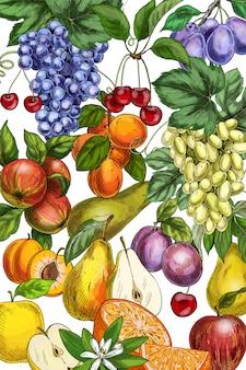 Ilustração de frutas mão desenhada