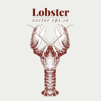 Ilustração de frutos do mar de vetor. lillustration vintage de lagosta. esboço de desenho de mão omar.