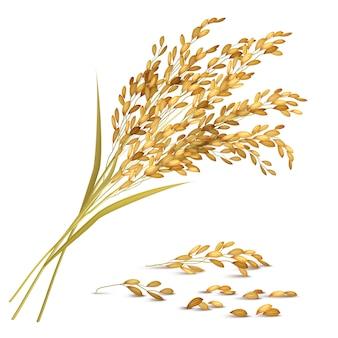 Ilustração de grãos de arroz