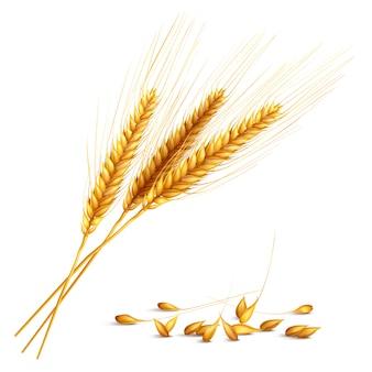 Ilustração de grãos de cevada