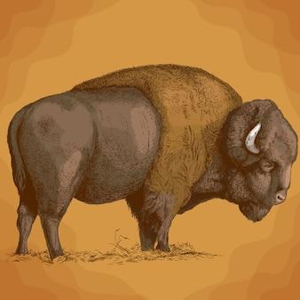 Ilustração de gravura de bisão