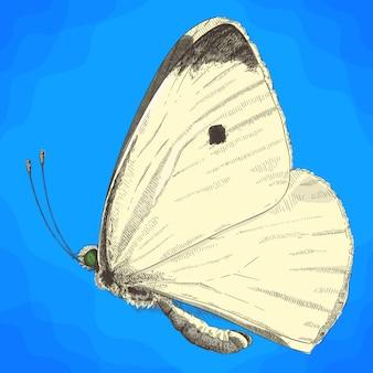 Ilustração de gravura de borboleta repolho branco pequeno