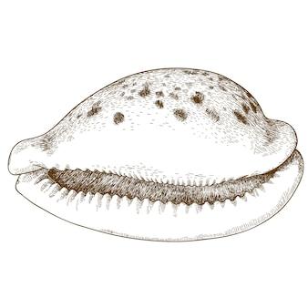 Ilustração de gravura de concha do mar