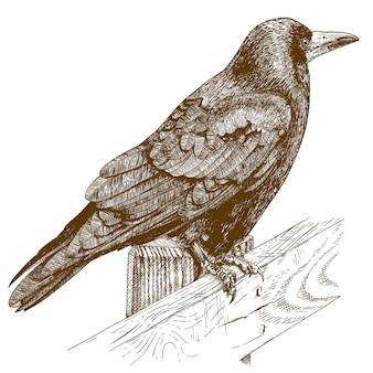 Ilustração de gravura de corvo