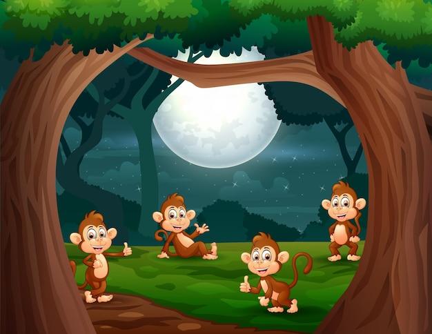 Ilustração de grupo de macacos na selva à noite