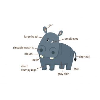 Ilustração, de, hipopótamo, vocabulário, parte, de, body.vector