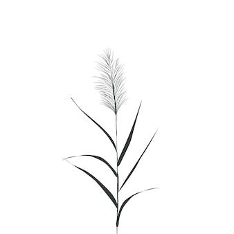 Ilustração de juncos preto e branco. silhueta de cana em fundo branco.