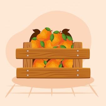 Ilustração de laranjas, fruta saudável alimentos orgânicos doce e natureza