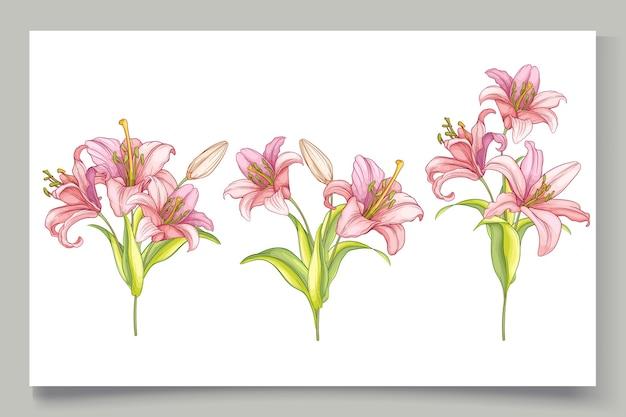 Ilustração de lindas flores de lírio desenhada à mão