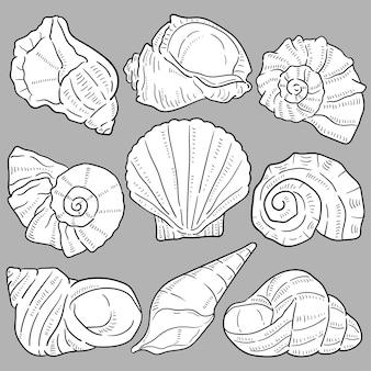 Ilustração de mão desenhada de conchas.