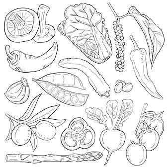 Ilustração de mão desenhada de vegetal.