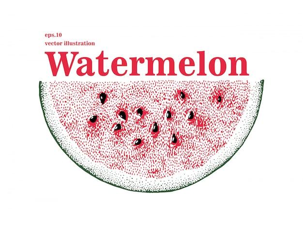 Ilustração de melancia vetorial desenhada de mão. fatia de melancia.