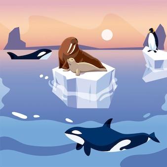 Ilustração de morsa e pinguim em iceberg orca baleias no mar
