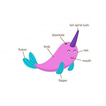 Ilustração, de, narwhal, vocabulário, parte, de, body.vector