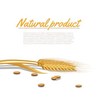 Ilustração de orelha de trigo