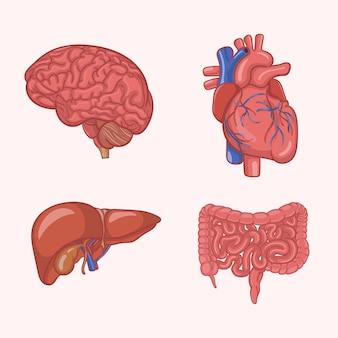 Ilustração de órgãos do corpo