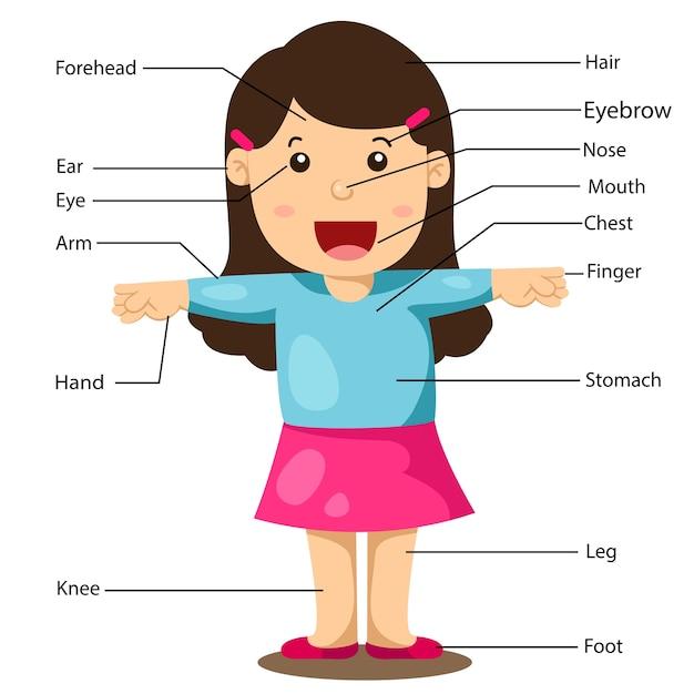 Ilustração, de, parte, de, menina corpo