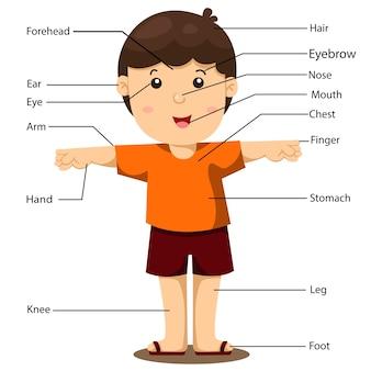 Ilustração, de, parte, de, menino corpo