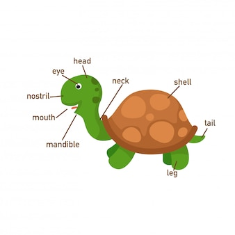 Ilustração de parte de vocabulário de tartaruga do corpo, escreva os números corretos de partes do corpo.