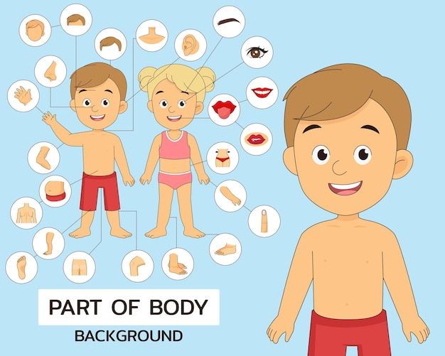 Ilustração de parte do corpo