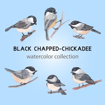 Ilustração de pássaro chapado preto chickadee