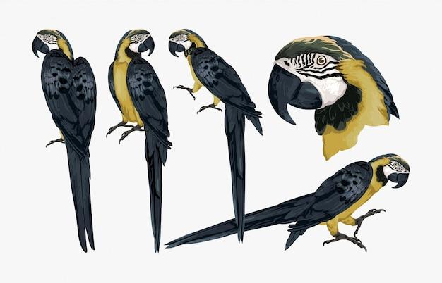 Ilustração de pássaro tropical arara exótica.