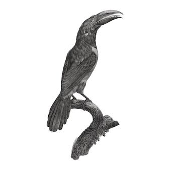 Ilustração de pássaro vintage