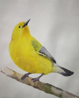 Ilustração de pássaros lindos desenhados à mão em aquarela