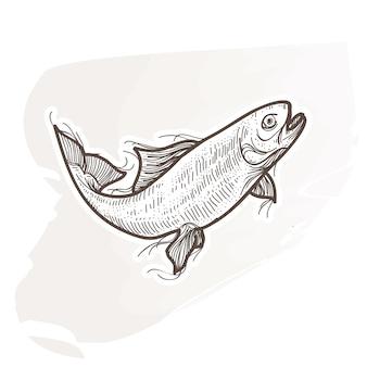 Ilustração de peixe salmão