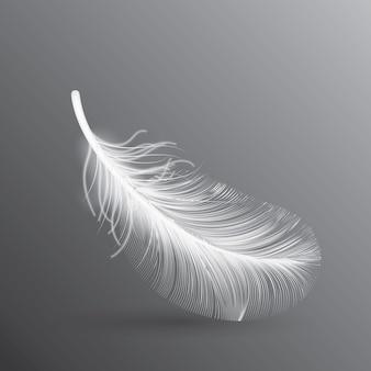 Ilustração de pena de pássaro branco