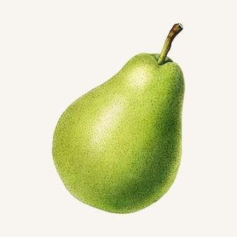 Ilustração de pera vintage.