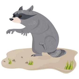 Ilustração de personagem de guaxinim