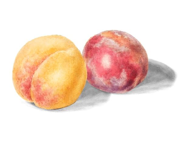 Ilustração de pêssegos vintage
