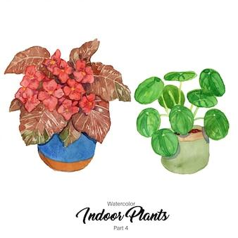 Ilustração de plantas de interior em aquarela