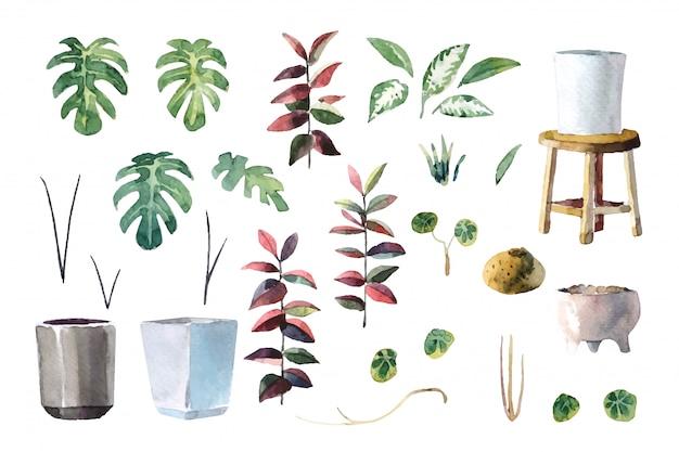 Ilustração de plantas em aquarela (monstera, lady palm, evergreen chinês, planta de borracha e stephania erecta)
