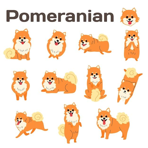 Ilustração de pomeranian, poses de cão, raça de cão