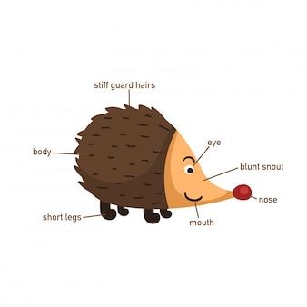 Ilustração, de, porco-espinho, vocabulário, parte, de, body.vector