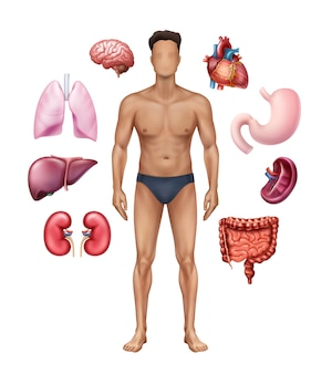 Ilustração de pôster médico retratando a anatomia humana com órgãos internos