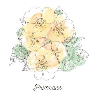 Ilustração de prímula amarela sobre fundo branco