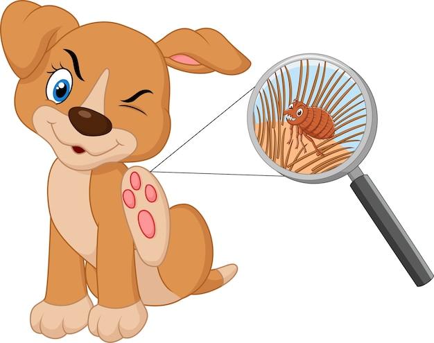 Ilustração, de, pulga, infestado, cão