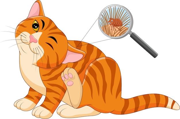 Ilustração, de, pulga, infestado, gato
