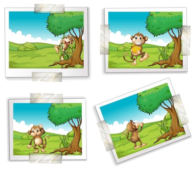 Ilustração de quatro fotografias de macacos